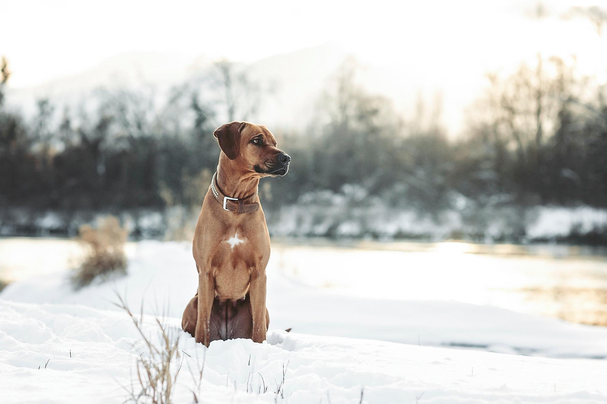 Hundefoto_Traunstein