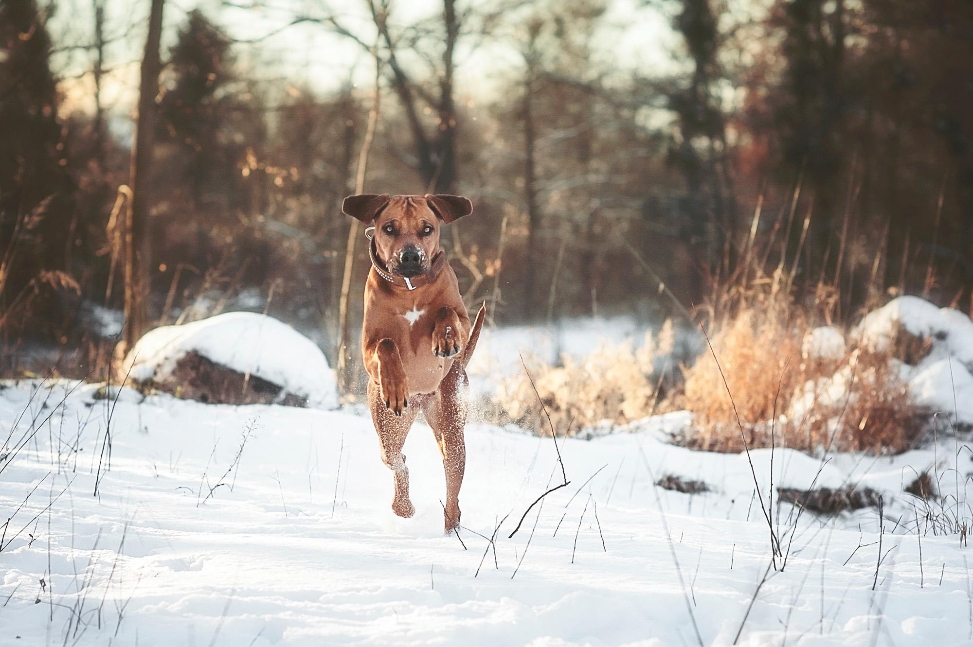 Hundefotos_Rosenheim